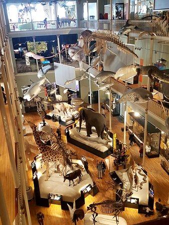 متحف اسكتلندا الوطني: Animals