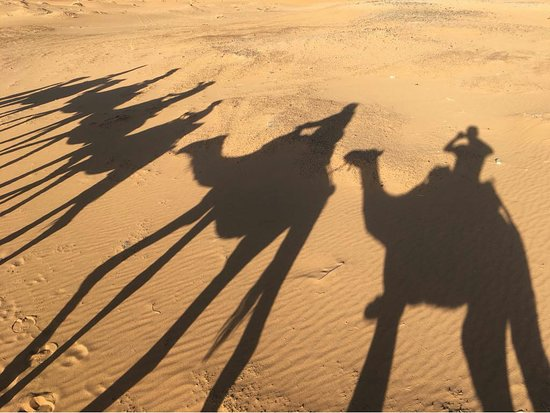 Camels House: Jky