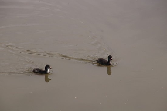 Cascade on Clyde Wetlands: More birds