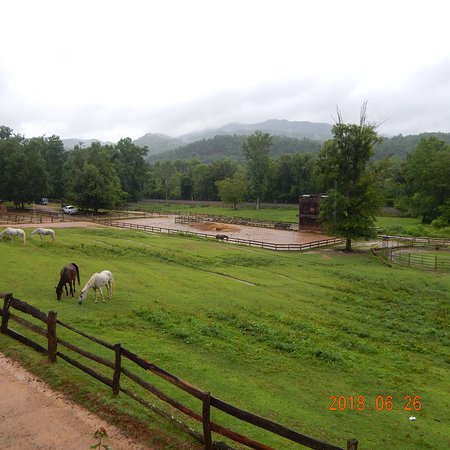 Del Rio, TN: Our scenic view of the Smokies and some horses...
