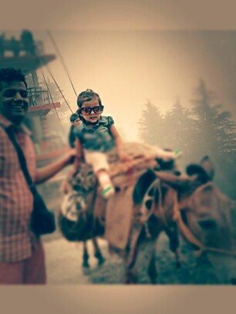 Dhanvi Tourizm Photo