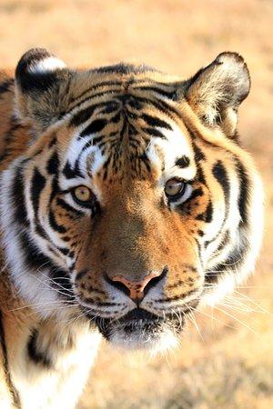 Bilde fra Lionsrock Big Cat Sanctuary