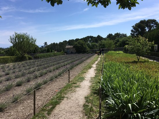 Be A Guest: lavender at Saint Paul de Mausole Monastery (where Van Gogh was treated for mental illness)