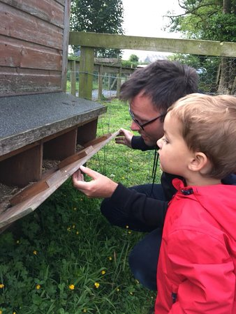 Llwyndyrys, UK: checking for eggs in the morning!