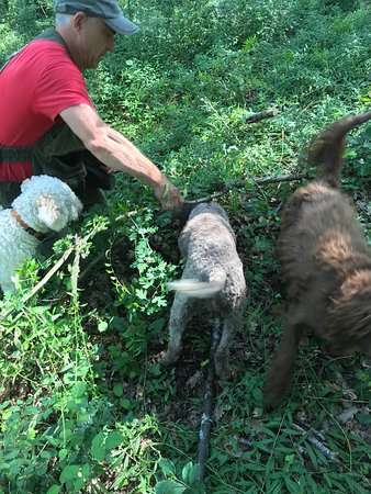 Truffle Hunting in Tuscany: all the truffle hunters in action