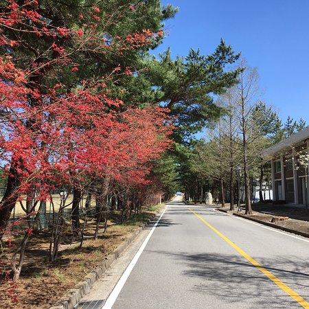 جانجيونج, كوريا الجنوبية: 강원도립대학교