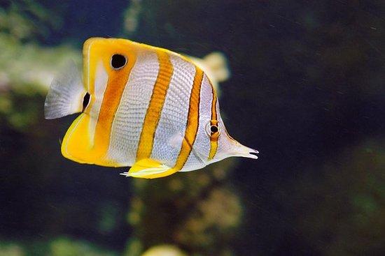 Gijon Aquarium Admission Ticket