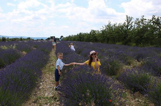Lavender fields wine tasting at...