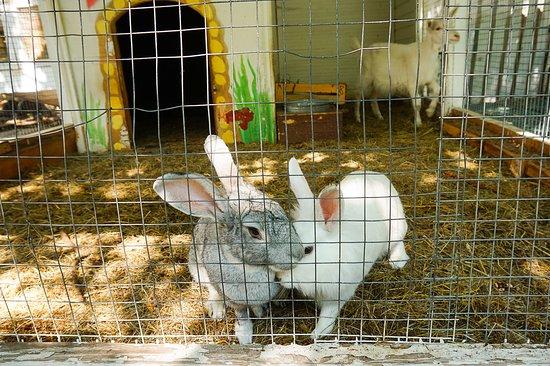 Elarji Restaurant: Cute rabbits :)