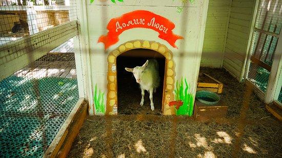 Elarji Restaurant: Little lamb staying the same cage as rabbits