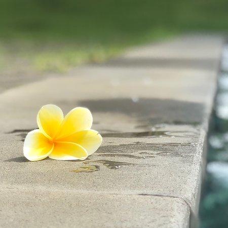 Tunjung Mas Resort Ubud : photo3.jpg