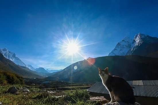 Himalayan Adventure: cat enjoying sun bath
