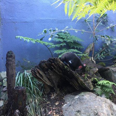 塔瑞噶野生动物园照片