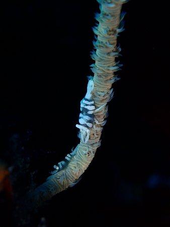 Walindi Plantation Resort: Diving