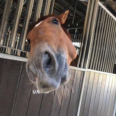 Centre Equestre de la Prade – valokuva