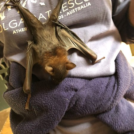 The Bat Hospital Visitor Centre Photo