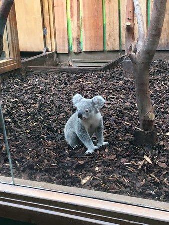 Фотография Edinburgh Zoo