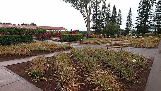 Dole Plantation: パイナップル