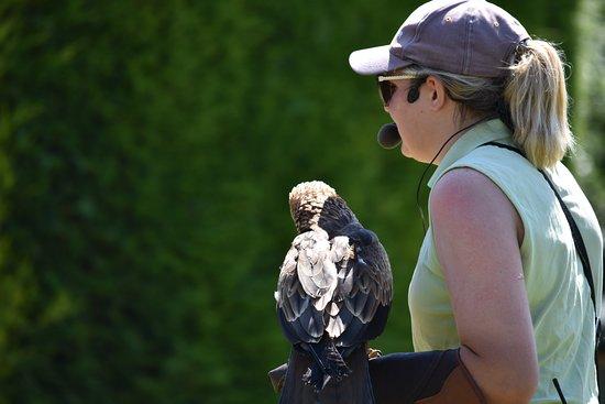 Falconry UK Thirsk Birds of Prey Centre: Expert handler.