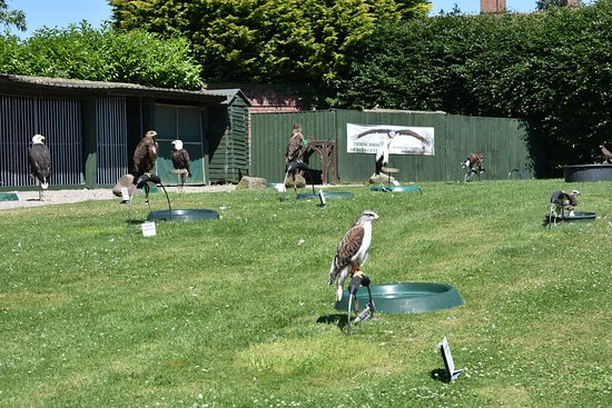 Falconry UK Thirsk Birds of Prey Centre: One of the holding areas for some of the 70 or so birds.