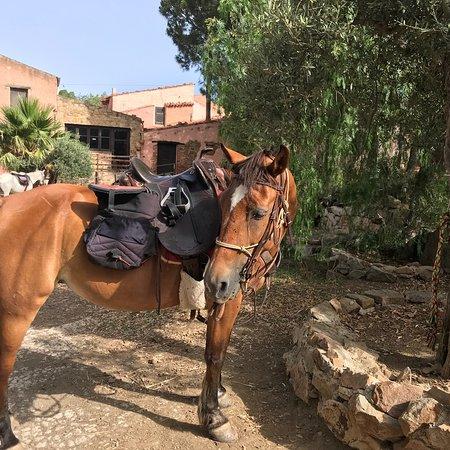 Sicily Horse Tours: photo7.jpg