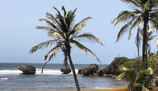 Bathsheba, Barbados: calming