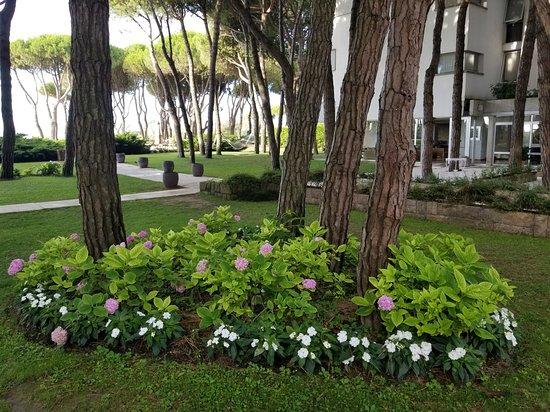 Hotel Bellevue & Resort: Beautiful environment