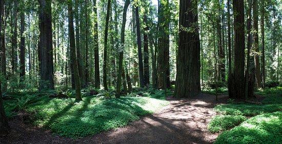 Weott, แคลิฟอร์เนีย: Humboldt Redwoods State Park, California
