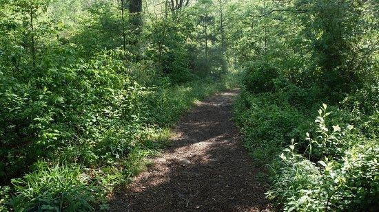 Pisgah National Forest: Cat Gap Loop Trail