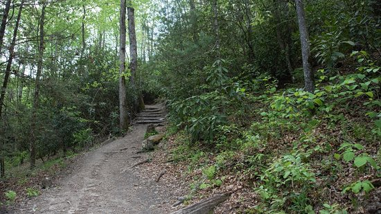 Pisgah National Forest: Cat Gap Loop Trail