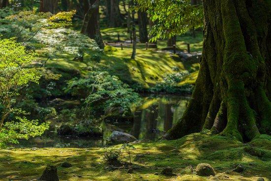 Saihoji Temple: moss and tree