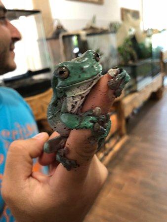 Reptisland: frog again
