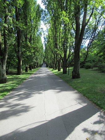 Botanical Gardens (Botanisk Hage og Museum): Viale d'ingresso