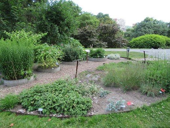 Botanical Gardens (Botanisk Hage og Museum): Aiuole