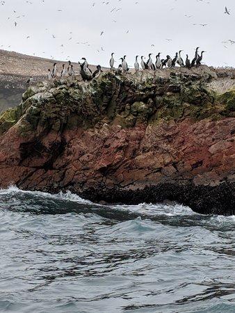 Islas Ballestas照片