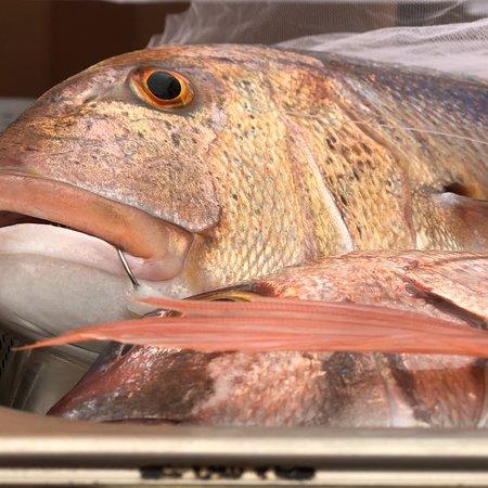 Pepe Nero: Pescato del giorno