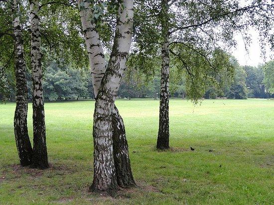 Gruneburgpark: Grüneburgpark