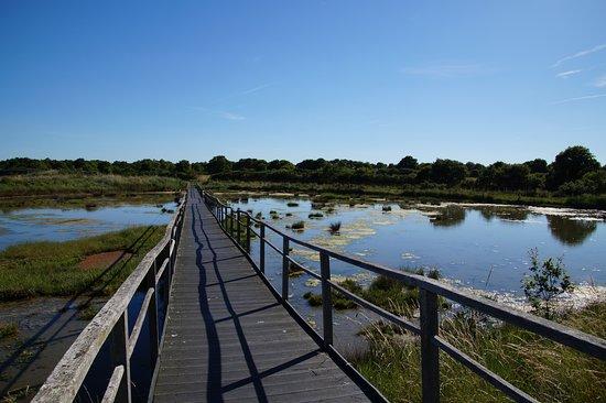 Réserve Naturelle Marais de Séné: Gute Wege über die Sumpflandschaft