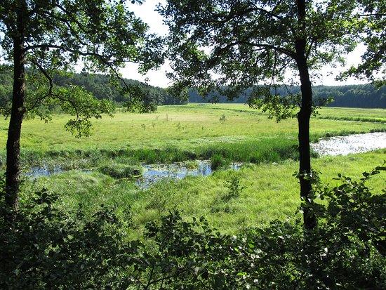 Cekcyn, Polônia: Widok z ambony na rzekę Stążkę oraz polanę, na której można niekiedy spotkać żurawie/czaple