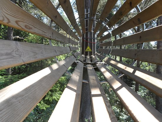 Go Ape Haldon Forest Park: Good photo opportunity.
