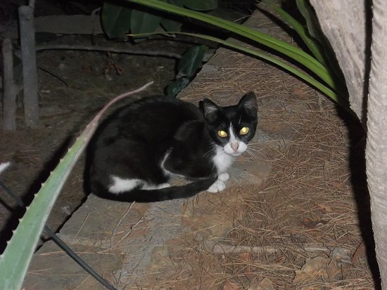 Golden Apartments: one of the small and cute greek cats