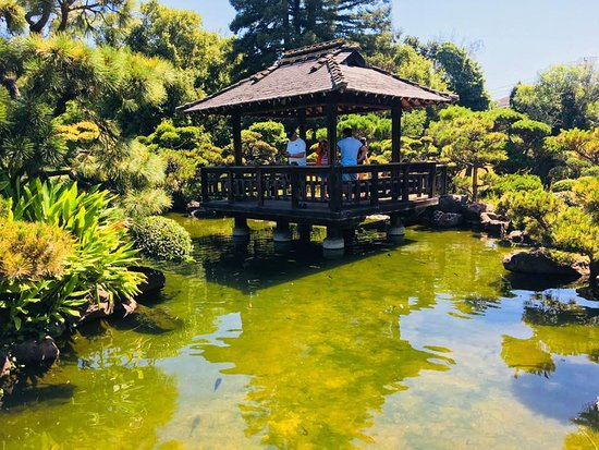 Koi Pond And Covered Patio Picture Of Hayward Japanese Gardens