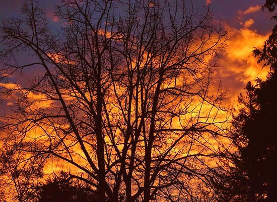 Lacamas Park Trail: The best sunrise we've had since living here, the sky was on fire.