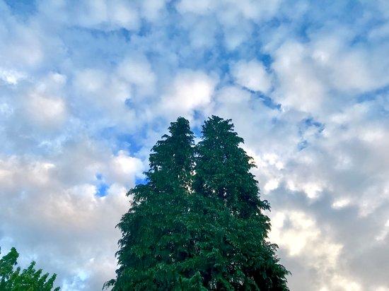 Lacamas Park Trail: Beautiful sky.