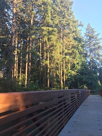 The new bridge at the park  - Picture of Lacamas Park Trail