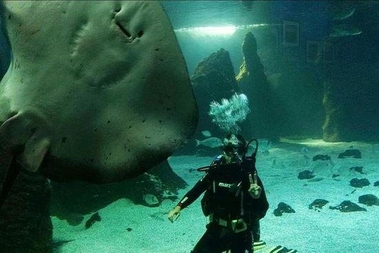 Lanzarote Aquarium Entrance Ticket