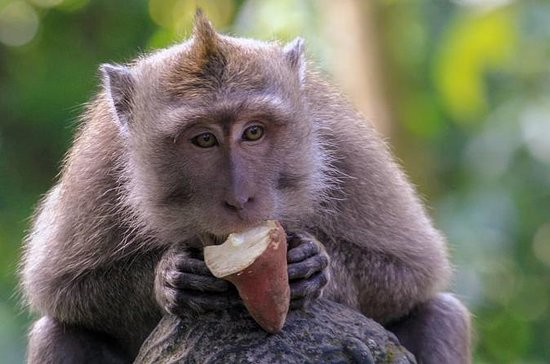 Best of Ubud: Monkey Forest, Temple...