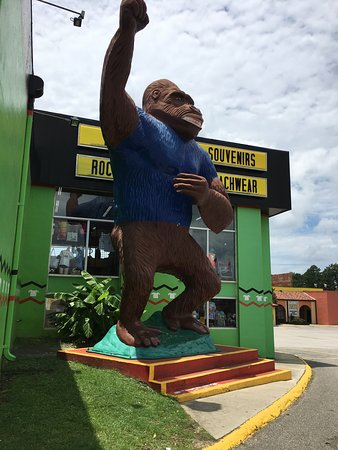 South of the Border: one of the many animals