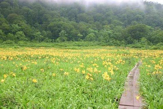 Tanashiro Wetland