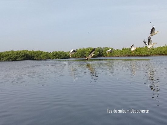 Iles du Saloum Decouverte照片